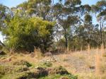 Canoelands Ridge - Scrub land.