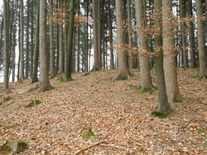 Climb up to summit - lots of slippery leaves!